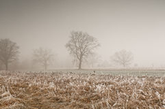 Morning, November frost on the meadows in the morning Royalty Free Stock Images