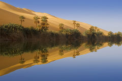 Morning in an oasis Stock Images