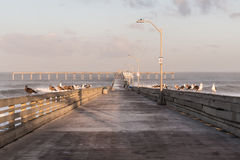 Morning on the Ocean Beach Fishing Pier Stock Image