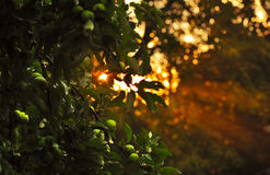 Morning in orchard Royalty Free Stock Photography