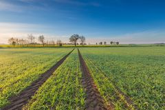 Morning over green field Royalty Free Stock Photography