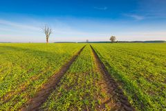 Morning over green field Royalty Free Stock Photo