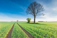 Morning over green field Stock Photography