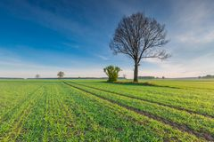 Morning over green field Royalty Free Stock Image