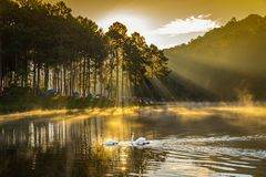 In the morning, Pang Ung Forestry Plantations, Thailand Stock Photo
