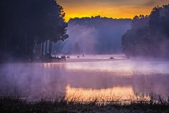 In the morning, Pang Ung Forestry Plantations,Thailand Royalty Free Stock Image