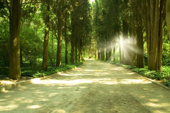 Morning is in a park Royalty Free Stock Images