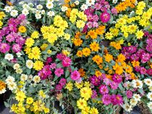 Colorful lovely little flowers in the park stock photography