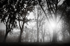 Morning in park Stock Photography