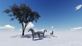 Morning Pasture Royalty Free Stock Image