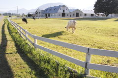 Morning Pasture Royalty Free Stock Images