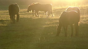 Morning Pasture Stock Image