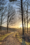 Morning path Royalty Free Stock Photography