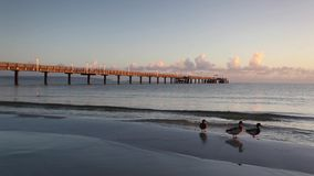 Morning on the Pier in Binz stock footage