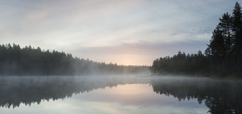 Morning in pond. Early morning in foggy pond Stock Photo
