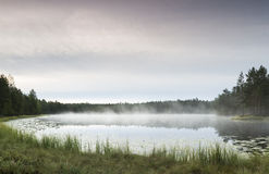Morning in pond. Early morning in foggy pond Stock Images
