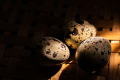 Morning quail eggs royalty free stock image