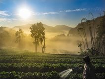 Bright morning, wind, fog, sunlight stock images