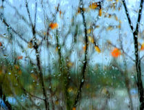 Morning Rain. View took from a inside window Stock Photos