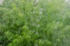 Morning rain, drops of water on a window glass background, copy space.  Stock Photo