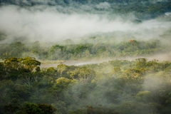 The Morning rain forest in Amazonic jungle, Ecuador. The Morning rain forest in Amazonic jungle with sunlight and fog, Ecuador royalty free stock photos