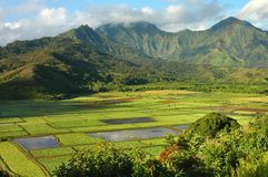 Morning Rainbow, Hanalei Valley. A morning rainbow captured over the taro fields of the Hanalei Valley on the island of Kauai in the Hawaiian Islands Stock Images