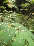 Morning raindrops on a leaf Royalty Free Stock Photography
