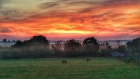 Morning in Amish county. Colorful sunrise over a horse farm in Amish country stock photos