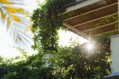 Sun ray in the morning among green plants. In the morning ray of sun makes its way through the green plants on the balcony Stock Photo