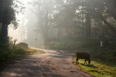 Morning rays. Morning sun falling on a road to madikeri Royalty Free Stock Photo