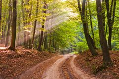 Morning rays in the autumn forest. The road is covered with fall. En leaves royalty free stock photography