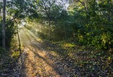 Morning rays in the forest. Morning sun-rays in the forest of Jim Corbett National Park, India Stock Images