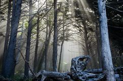 Morning rays through a forest stock image