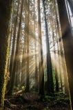 Morning Rays Royalty Free Stock Photo