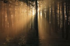 In morning rays. Sun rays a game only on 3-4 minutes Stock Images