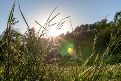 Morning rays of the sun make their way through blades of grass close up stock photo