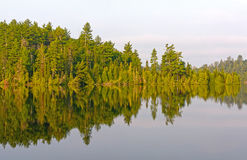 Morning Reflections in the North Woods Royalty Free Stock Image