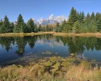 Morning Reflections - The Tetons Royalty Free Stock Photo