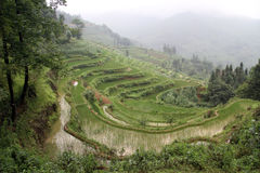Morning and rice terraces Royalty Free Stock Photography