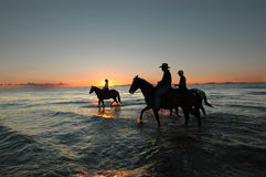 Morning ride along beach. Four horses being walked along beach as the sun peaks over the horizon very early in the morning stock image