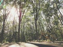 Morning ride, cycling. Riding through the rubber tree garden Royalty Free Stock Image