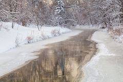 Morning River. Reflection of trees in the winter river royalty free stock images