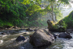 Morning river in Bali Royalty Free Stock Photo