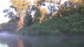 Morning on the river early morning reeds mist fog. And water surface on the river stock footage