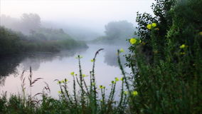 Morning river fog and beautiful flovers stock video footage