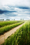 Morning road. Nature background, spring morning... field of green grass and cloudy sky Royalty Free Stock Images