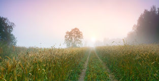 Morning road among fields with ears of rye towards the sun horizontal background Stock Photo