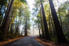 Morning Road. In the woods Royalty Free Stock Photos