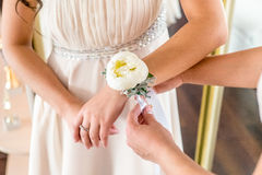 Morning routine bride putting on the boutonnieres Royalty Free Stock Photography