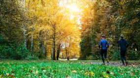 Running athletes in the park on a run in the early morning. Several children are running in the woods doing sports. Morning running. Running athletes park on a Royalty Free Stock Image